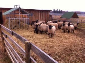 zázemí pro ovce